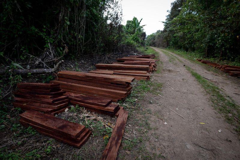 Extracción ilegal de madera en el territorio de Wangki Twi Tasba Raya. Carlos Herrera | Divergentes.